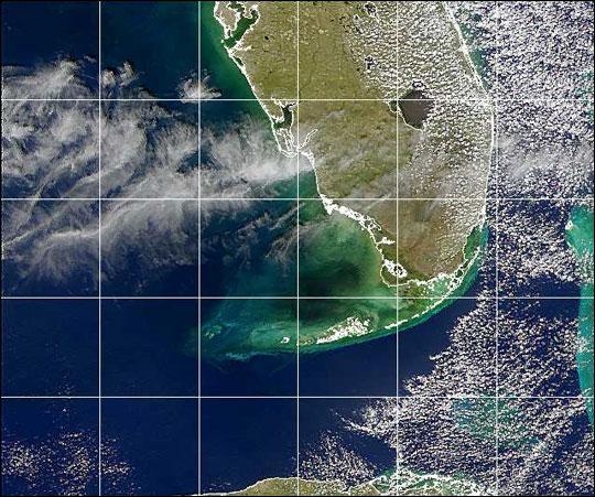 Agua negra cerca de la costa del Golfo de Florida