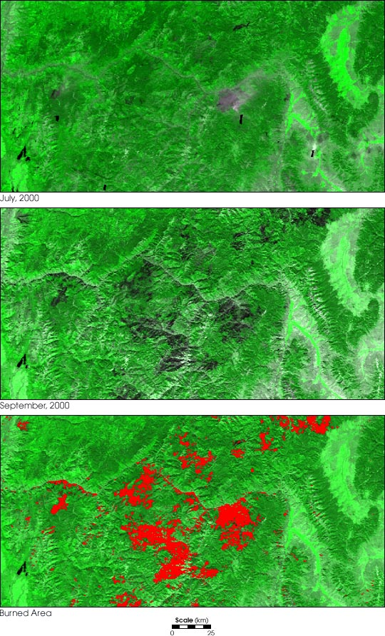 Land Cover Change from Fire