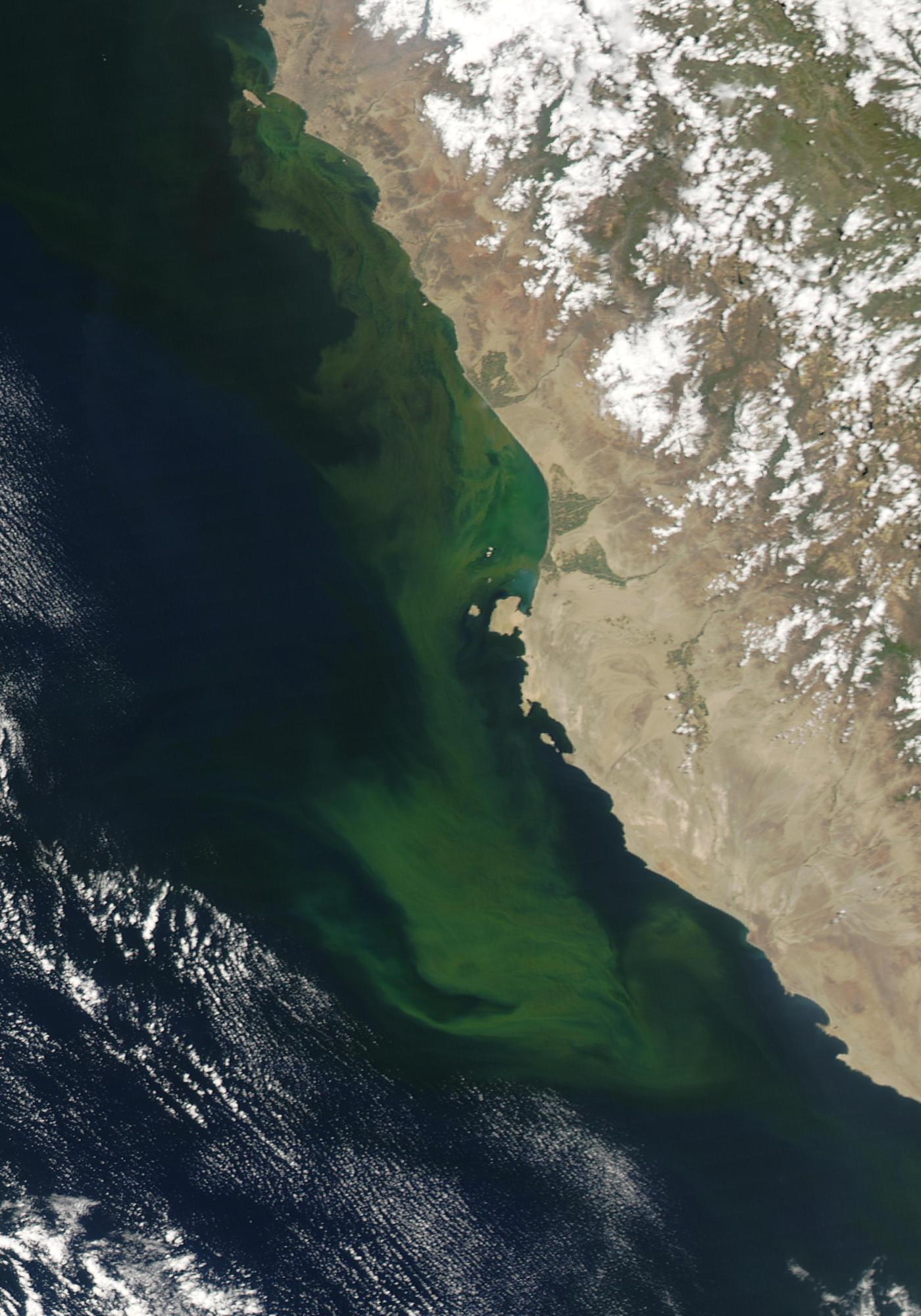 Floración algal cerca de Perú