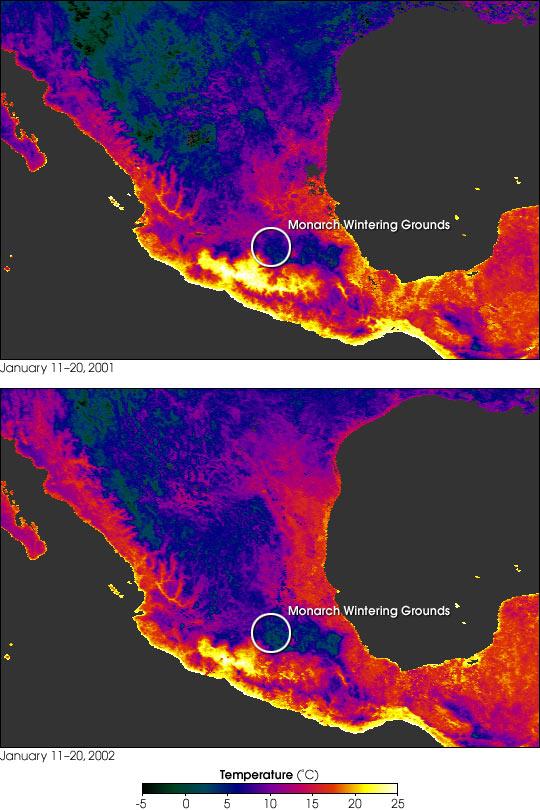 La mortalidad en masa de mariposas monarca en Mexico