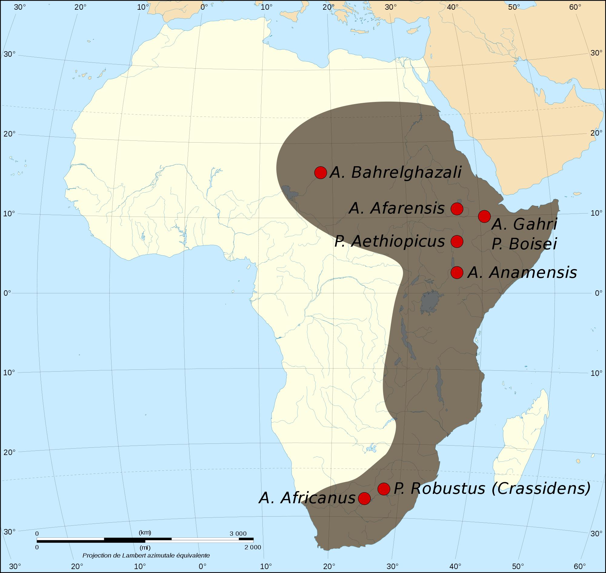 Australopithecine in Africa