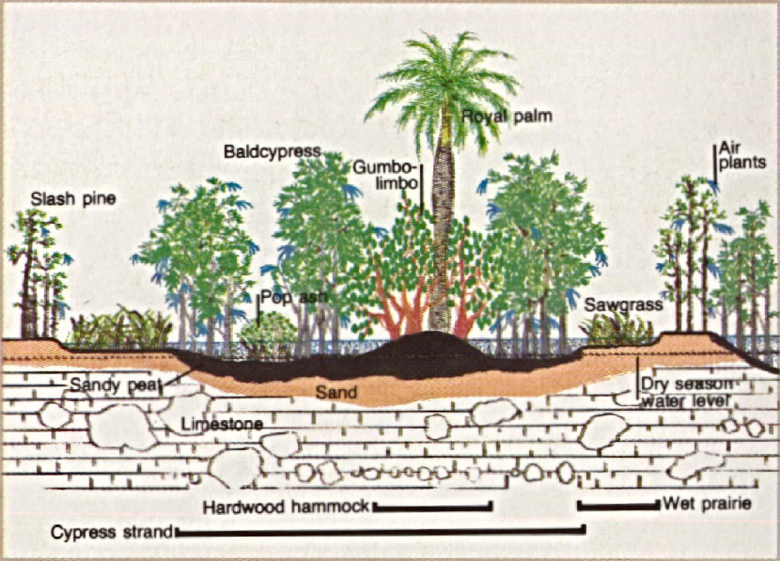 Mapa-Esquema de la Reserva Natural Nacional Big Cypress, Florida, Estados Unidos