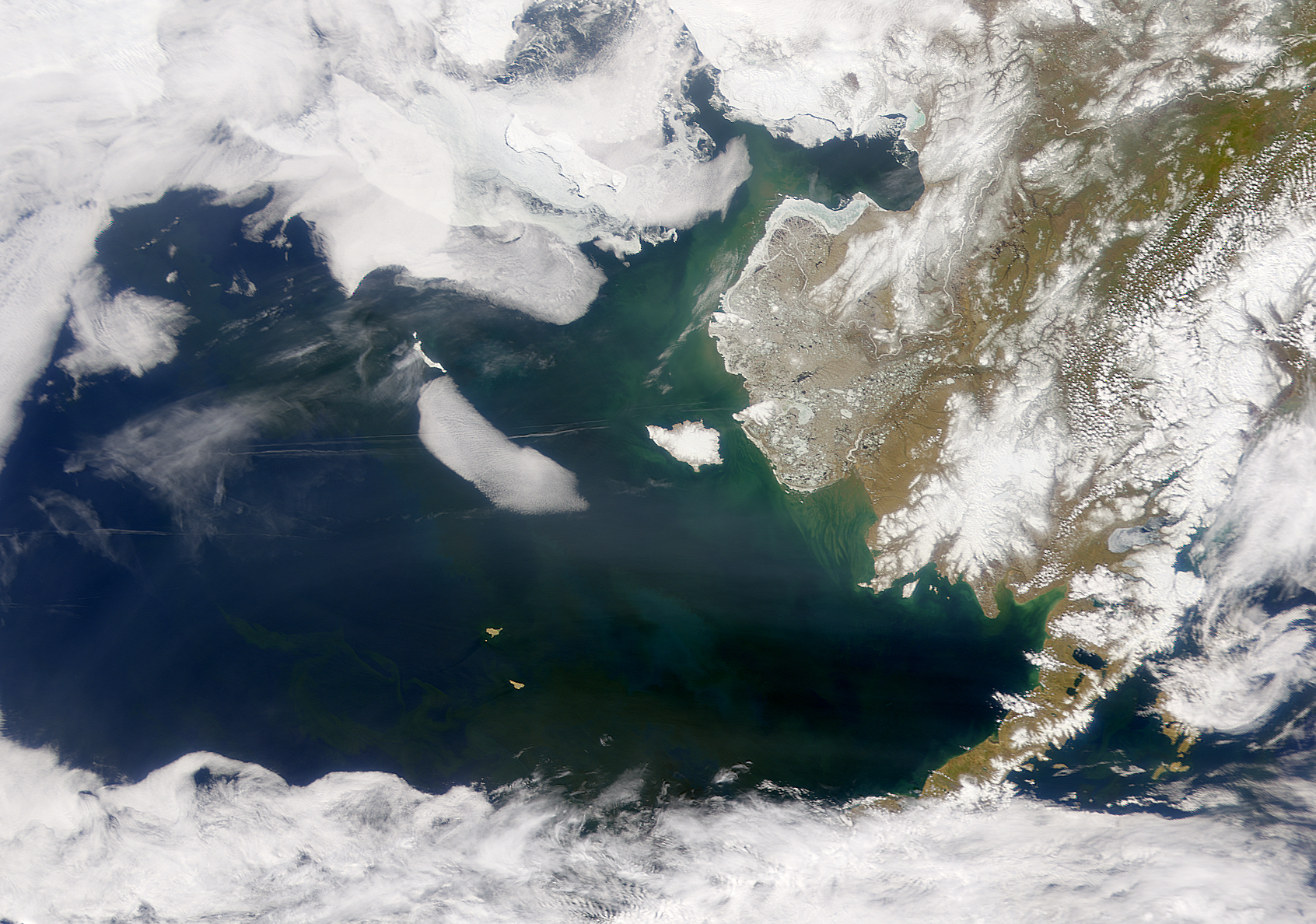Bering Sea in Bloom