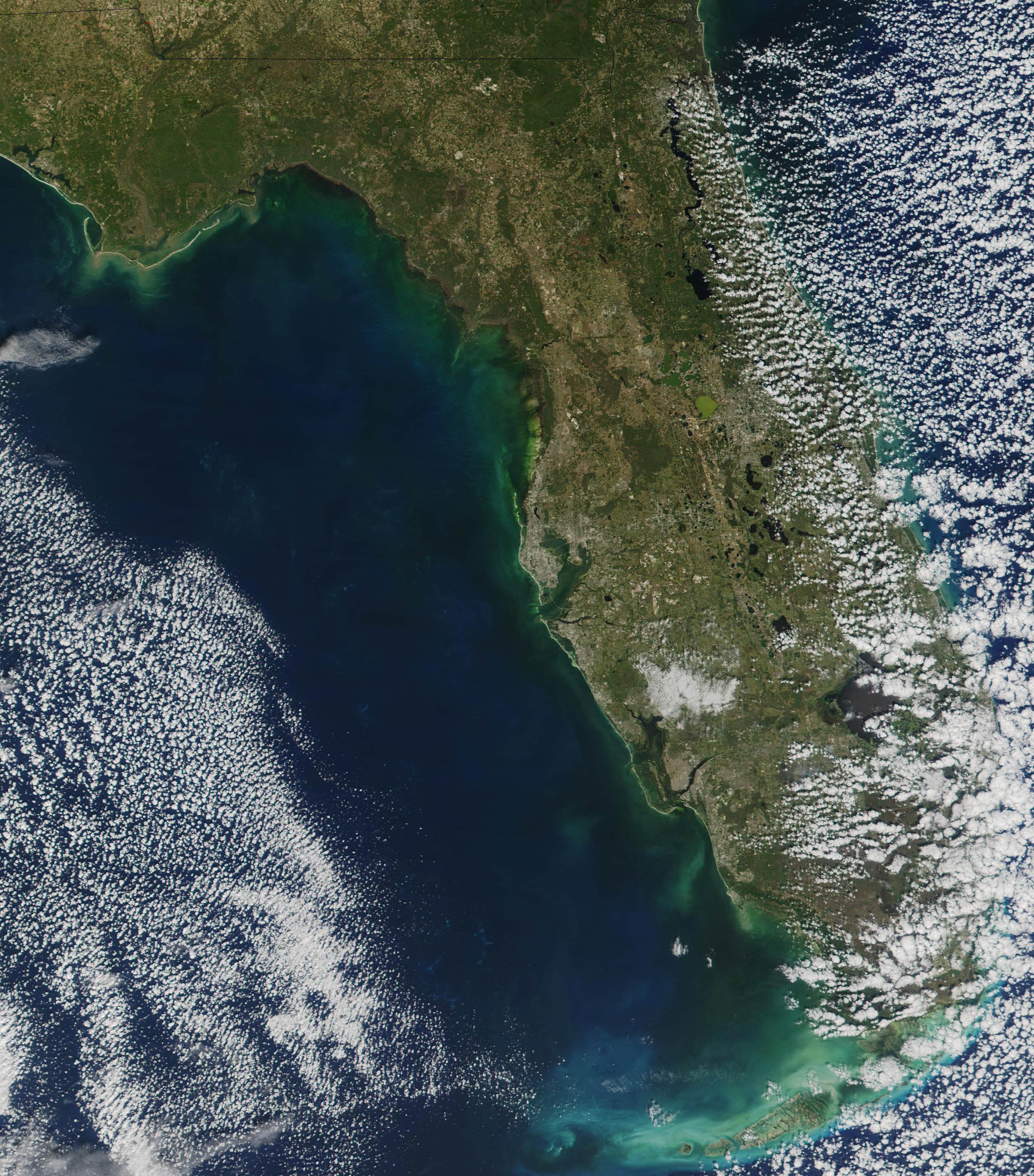 Red Tide Along Florida's West Coast