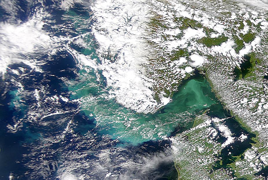 Proliferación de fitoplancton en el Estrecho de Skagerrak se intensifica