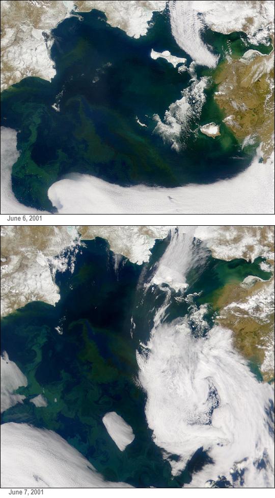 Proliferación de fitoplancton en el Mar de Bering