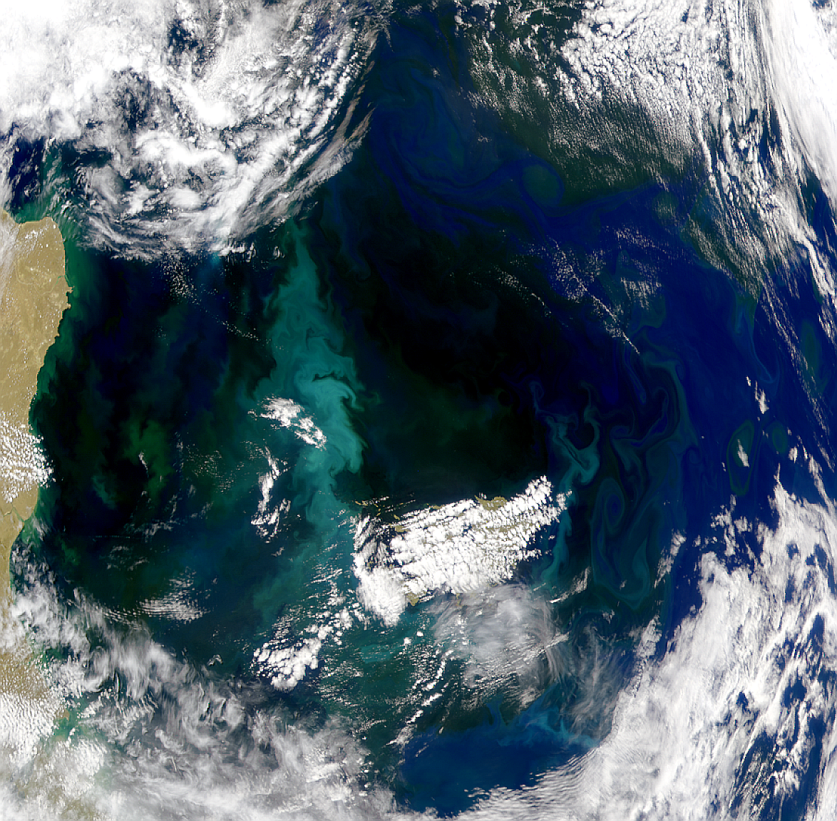 Proliferación de primavera alrededor de las Islas Malvinas