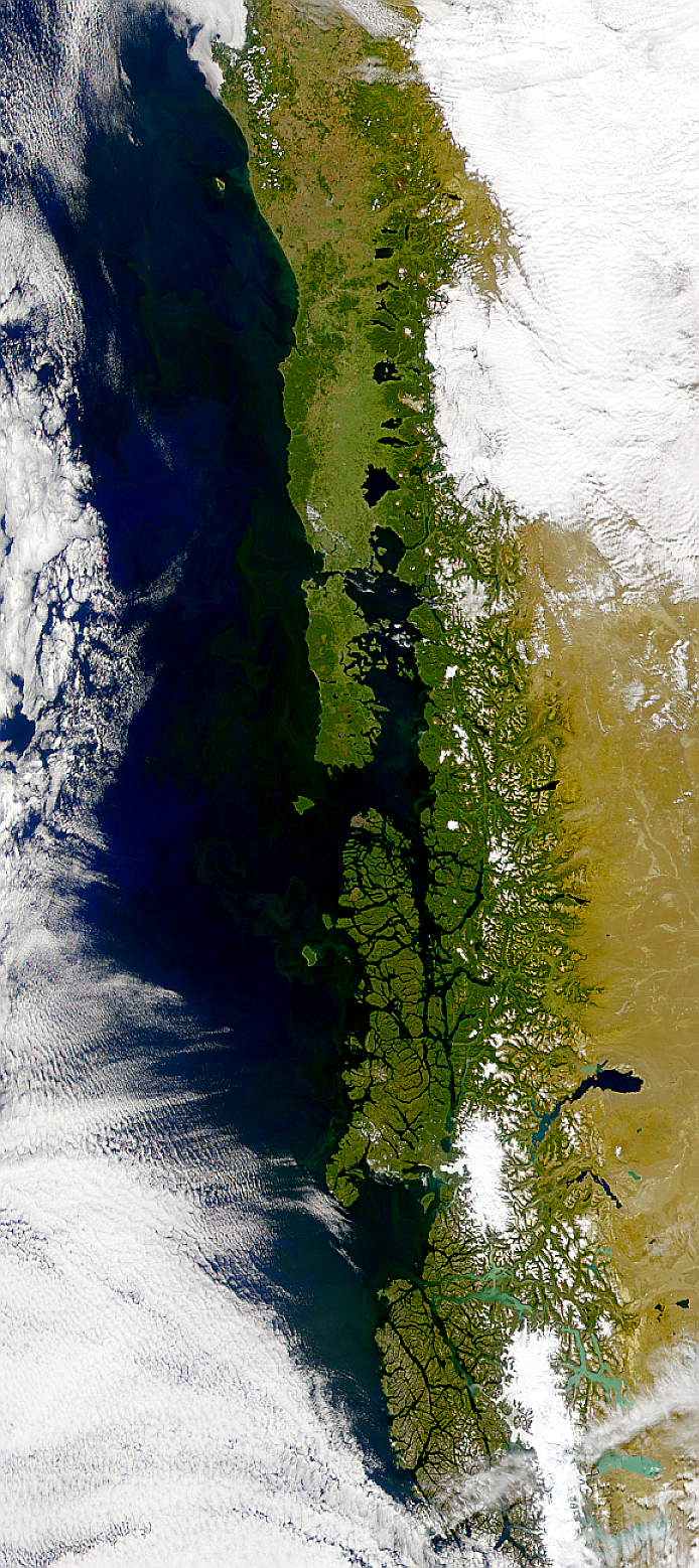 Chilean Coastal Blooms