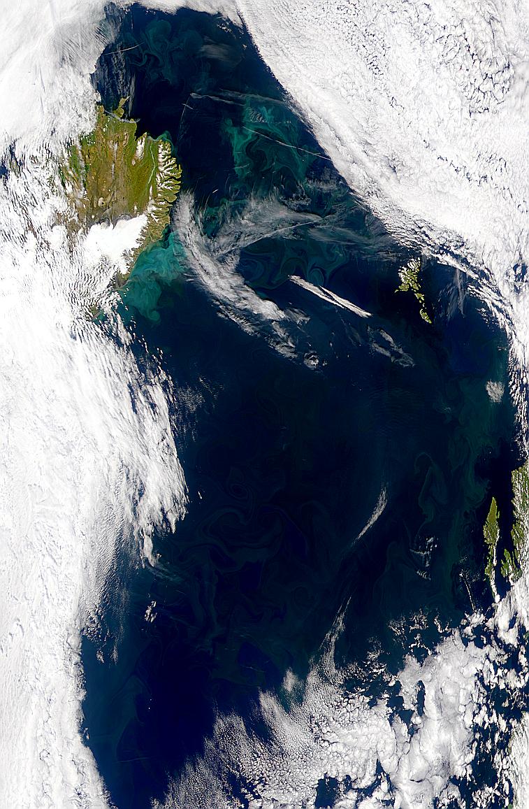 Proliferaciones cerca de Islandia