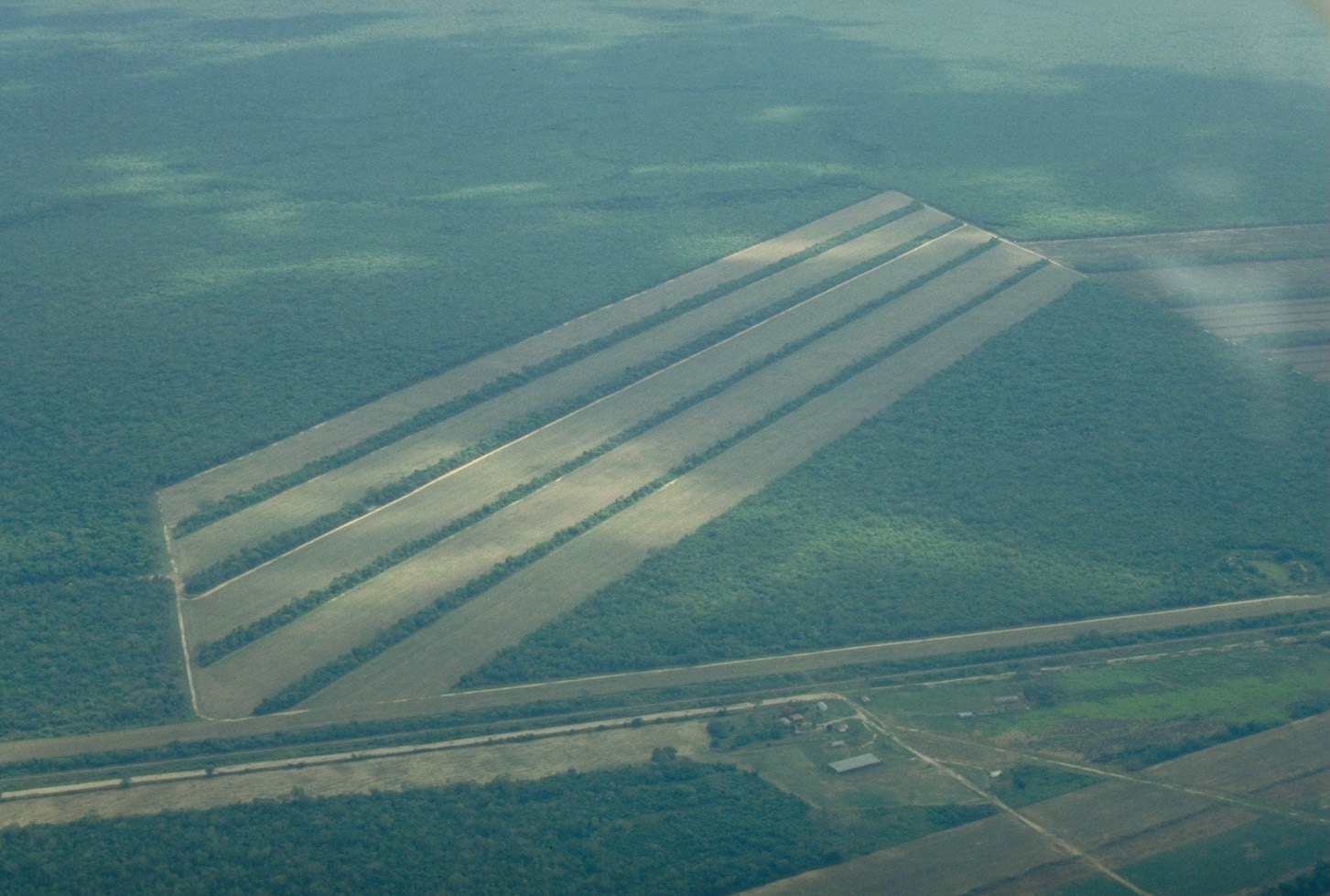 Satellite Image, Photo of Soybeans Fields East of Santa Cruz, Bolivia
