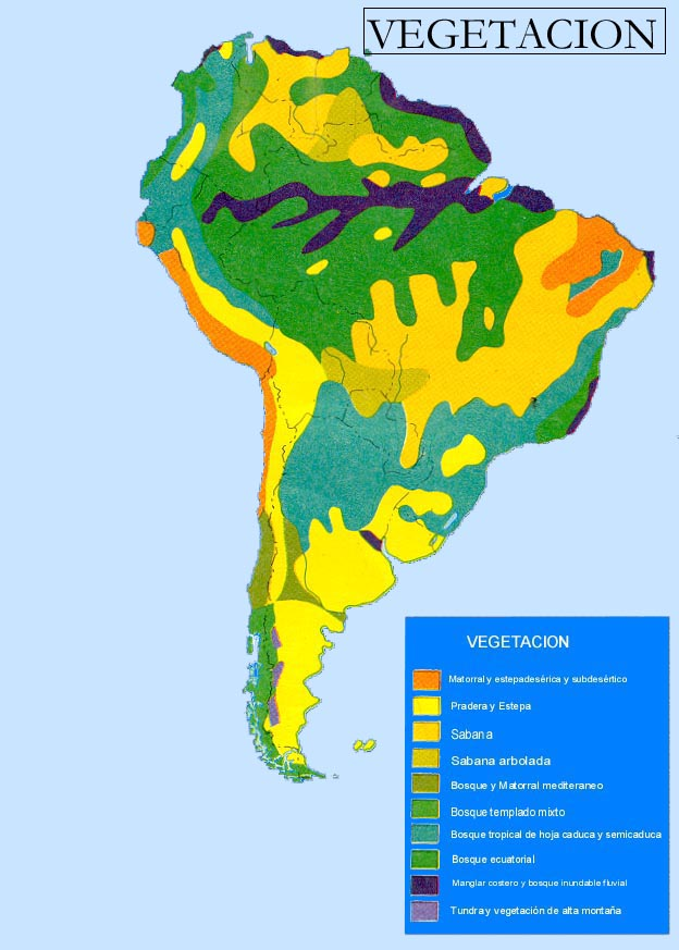 South America vegetation