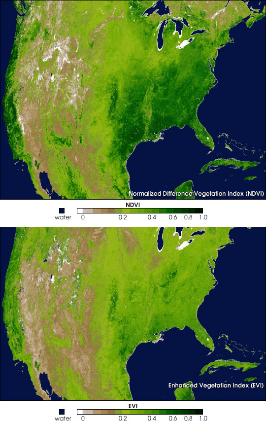 Spring Vegetation in North America
