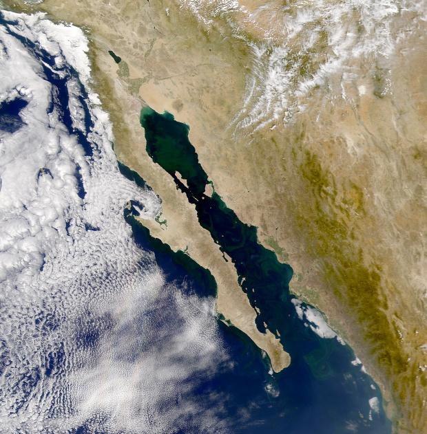Fitoplancton en el Golfo de California