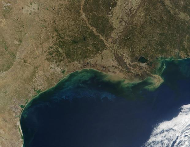 Fitoplancton y sedimentos en el Golfo de México