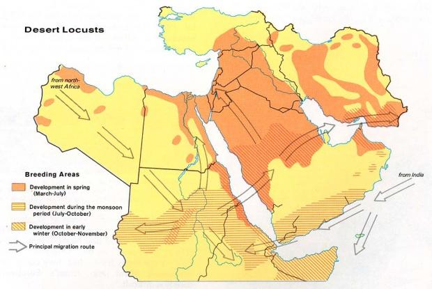 Langostas del desierto del Oriente Medio 1973