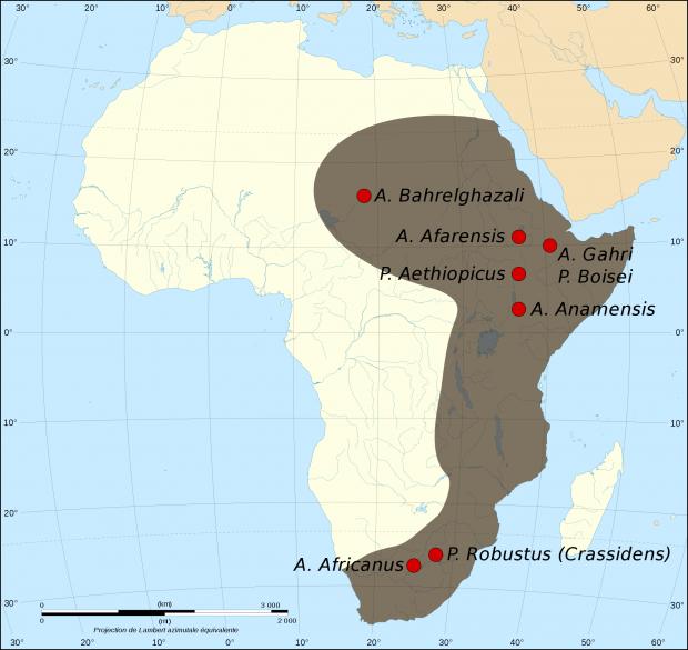 Los australopitecinos (Australopithecina) de África