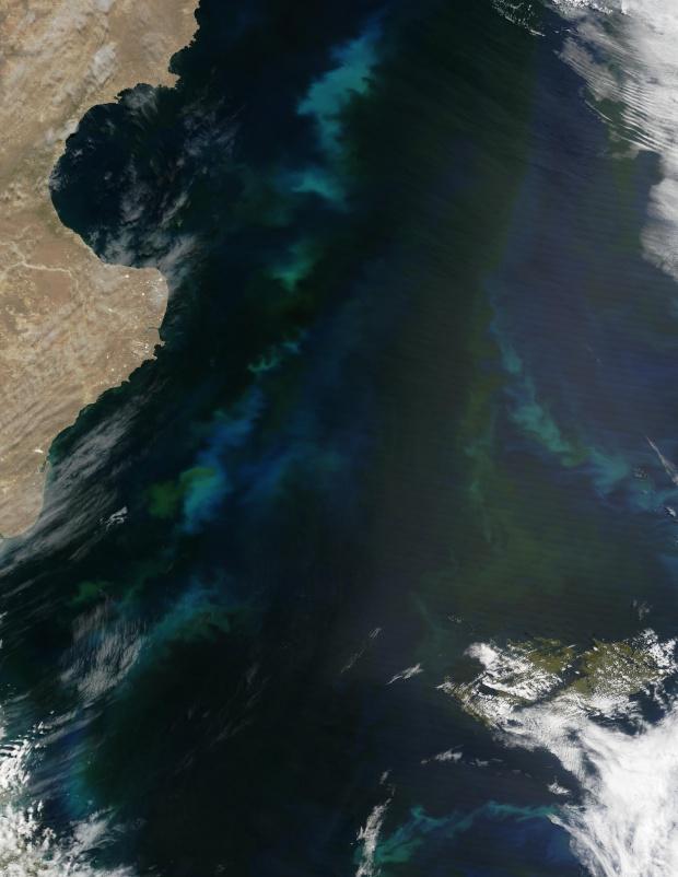Proliferación de fitoplancton cerca de Argentina