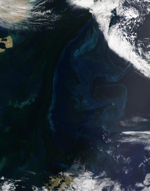 Proliferación de fitoplancton cerca de la costa de Argentina