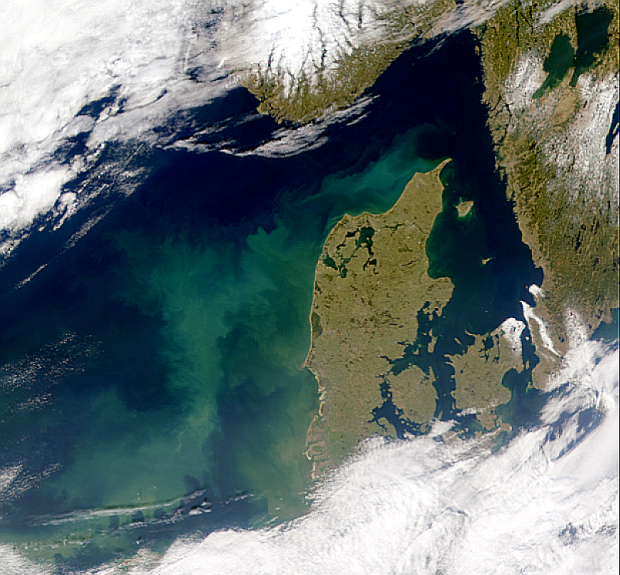 North Sea Bloom