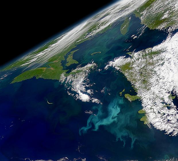 Proliferación marina al sur de Terranova