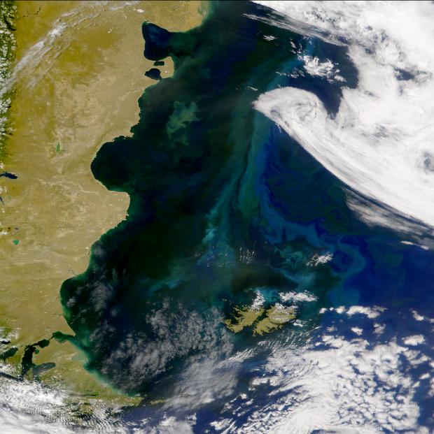 Proliferaciones en la plataforma patagónica