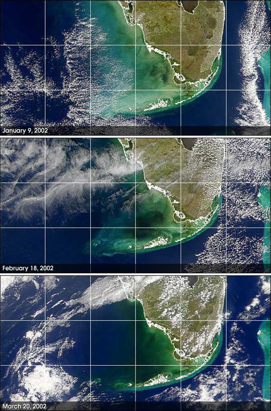 Agua negra misteriosa cerca de la costa del golfo de Florida