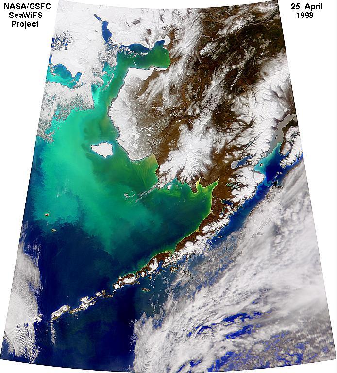 Coccolithus pelagicuss en el Mar de Bering