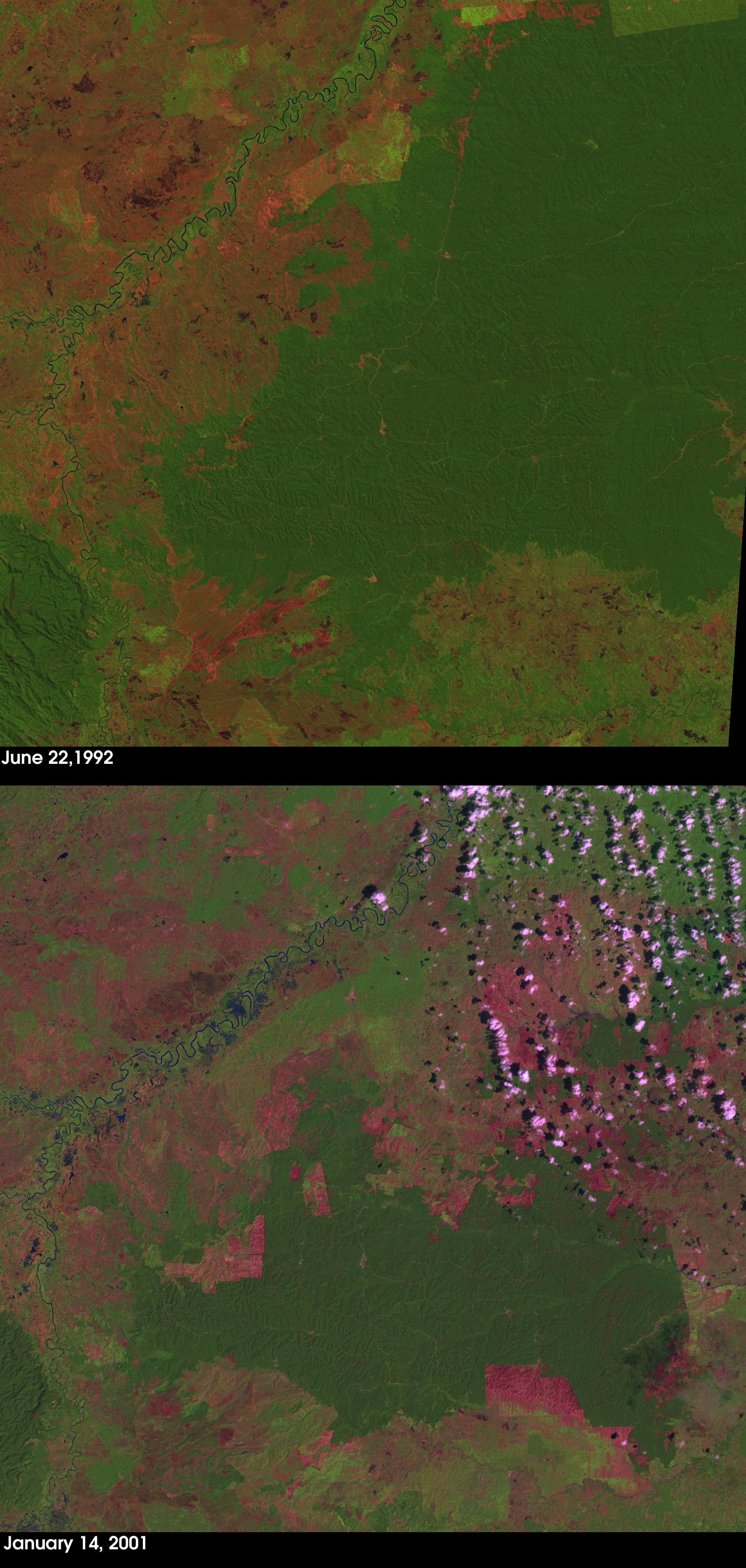 Deforestación en Sumatra