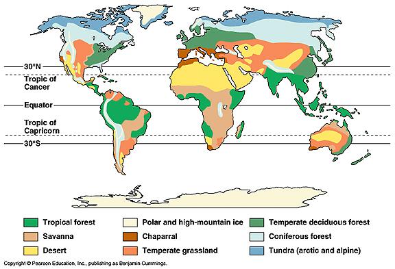 World major ecosystem