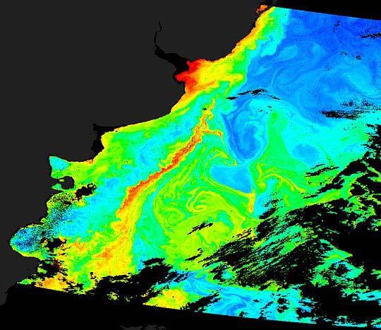 Fitoplancton cerca de Argentina