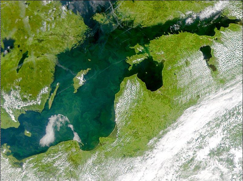 Fitoplancton en el Mar Báltico 2001