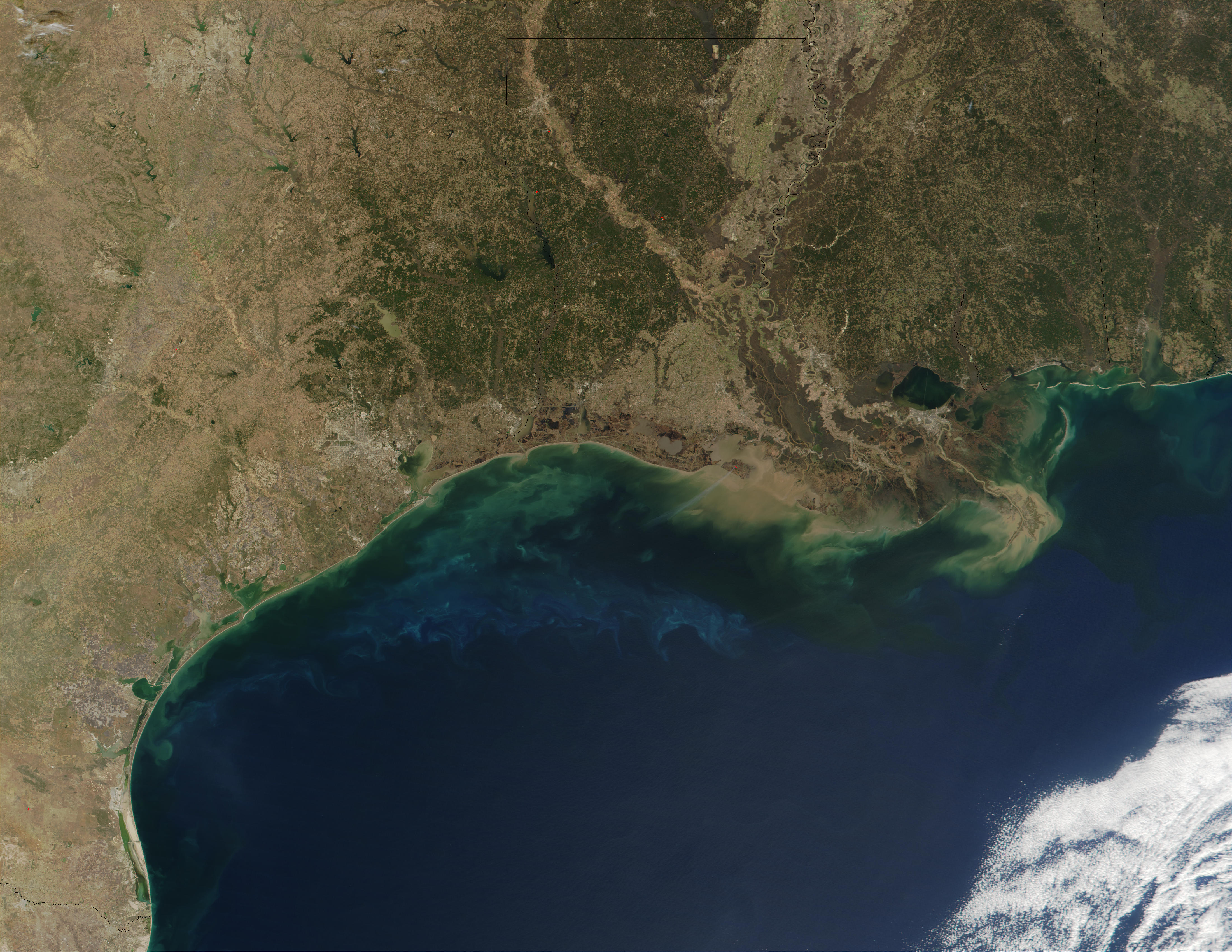 Phytoplankton and sediments in Gulf of Mexico