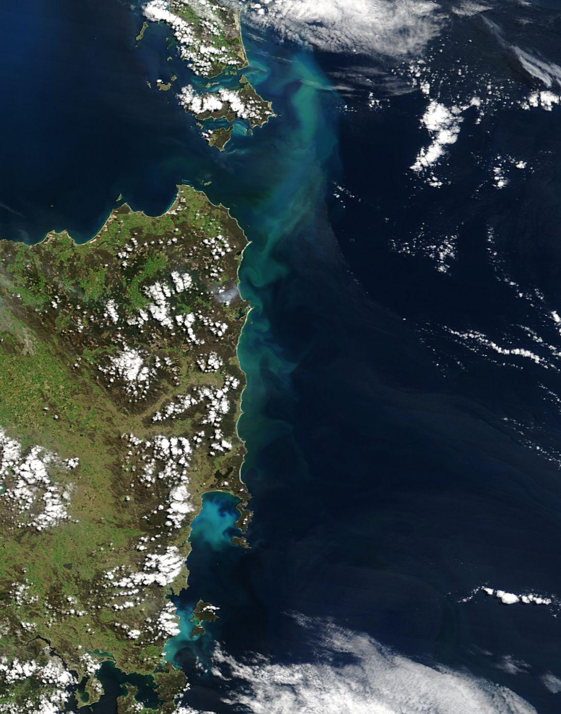 Floración algal cerca de Tasmania