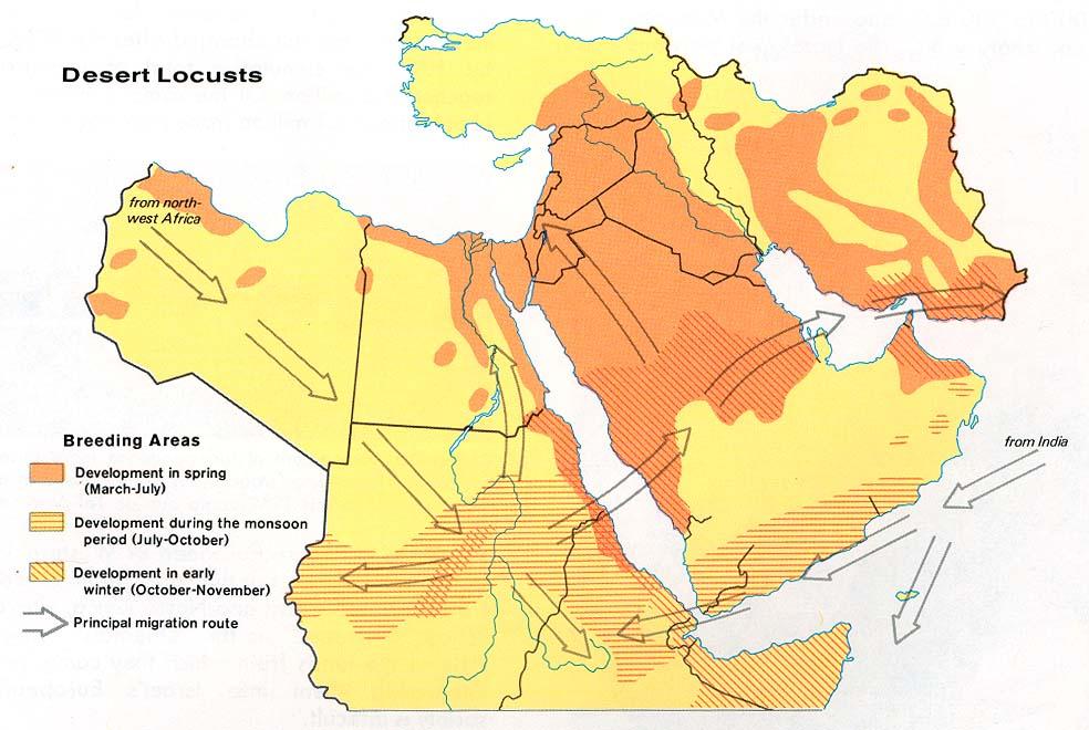 Middle East Desert Locusts 1973