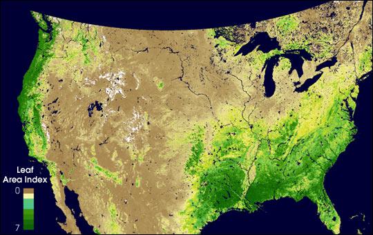 Mide densidad de plantas del dosel de Estados Unidos