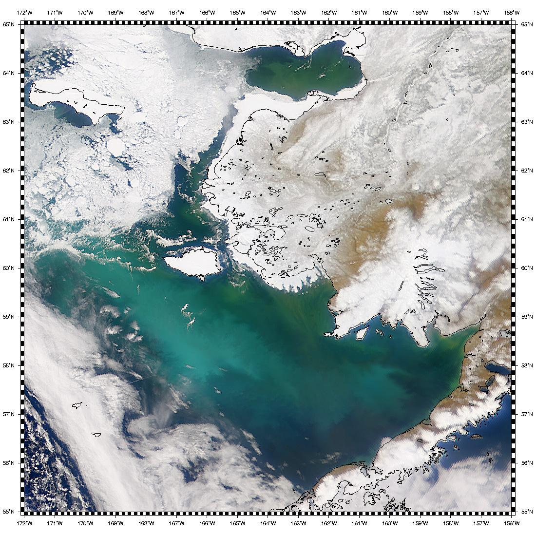 Nueva proliferación de Coccolithus pelagicus en el Mar de Bering