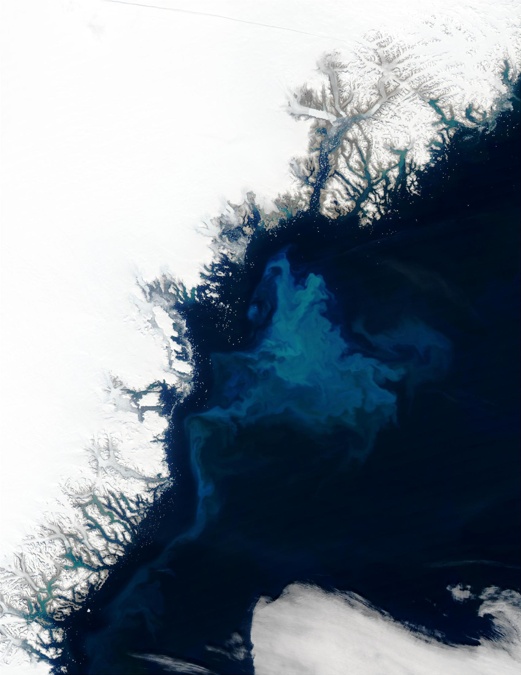 Proliferación de fitoplancton cerca de Groenlandia
