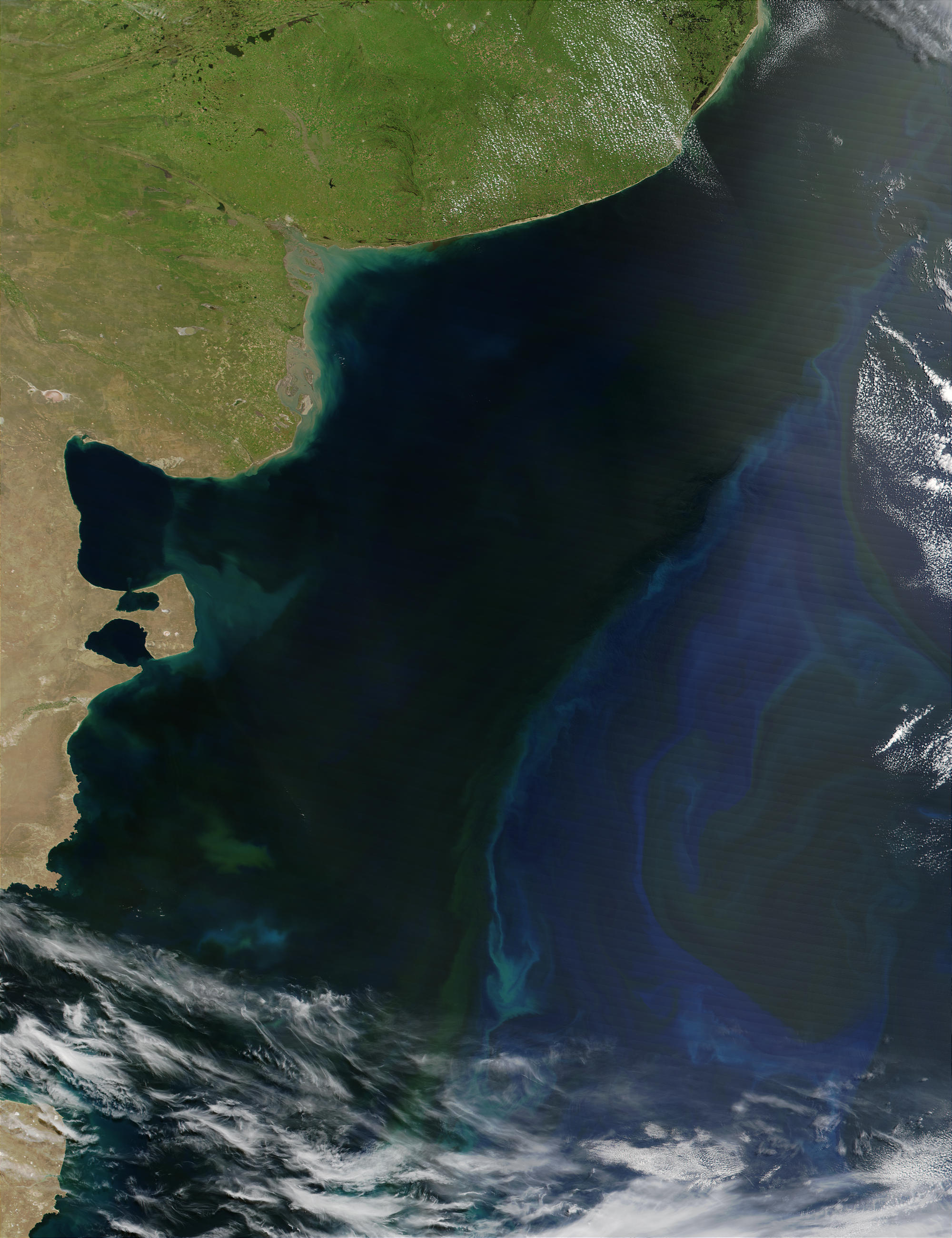 Phytoplankton bloom off the coast of Argentina