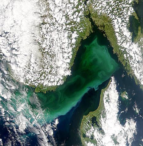 Proliferación de fitoplancton en el Estrecho de Skagerrak