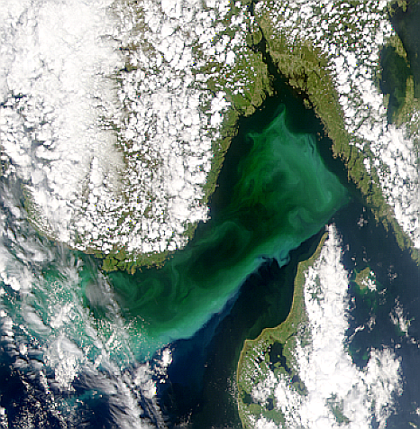 Phytoplankton Bloom in Skagerrak