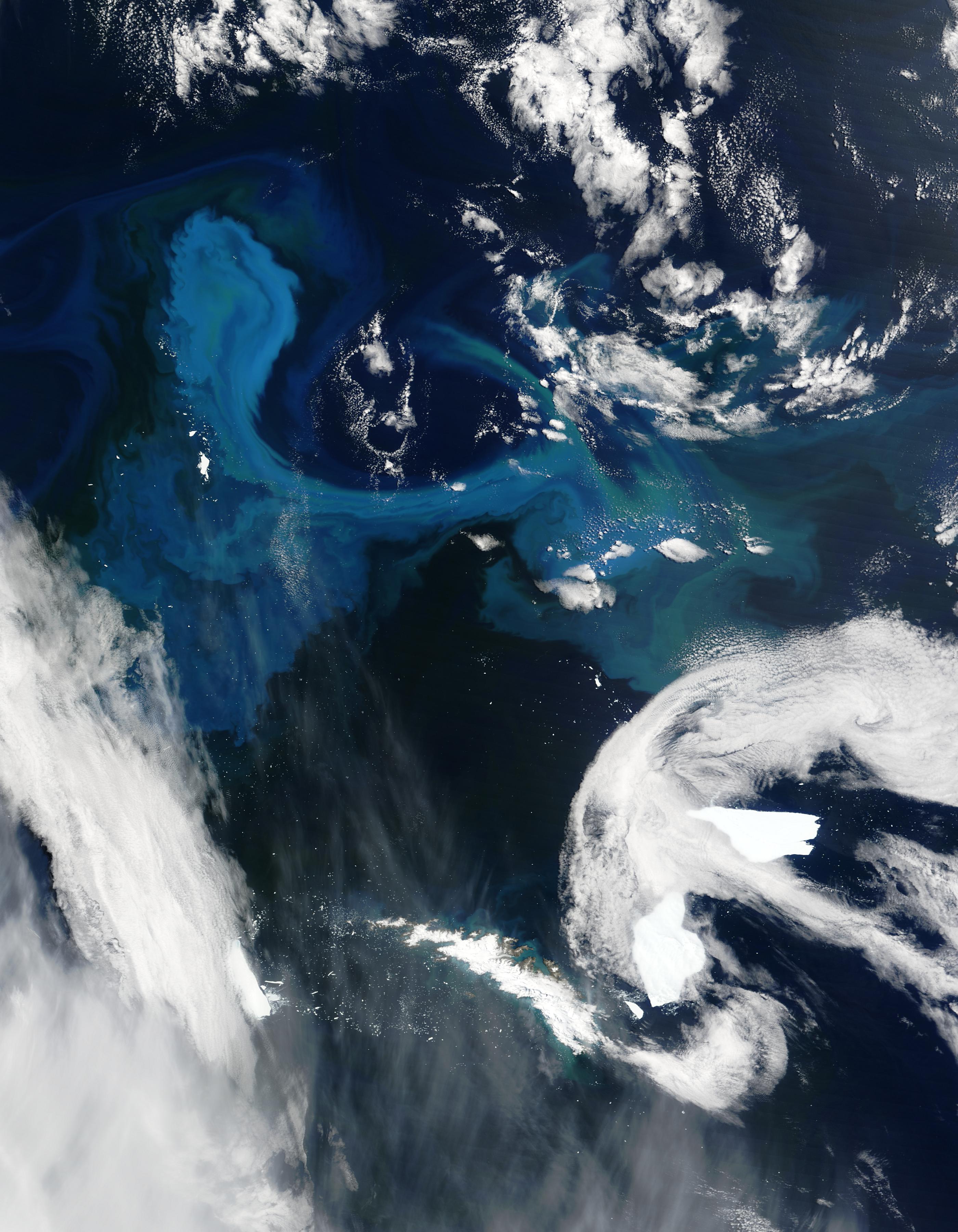 Proliferación de fitoplancton en la vecindad de las Islas Georgias del Sur