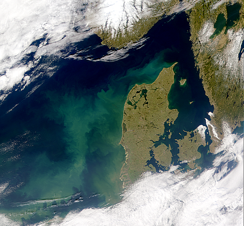 Proliferación en el Mar del Norte