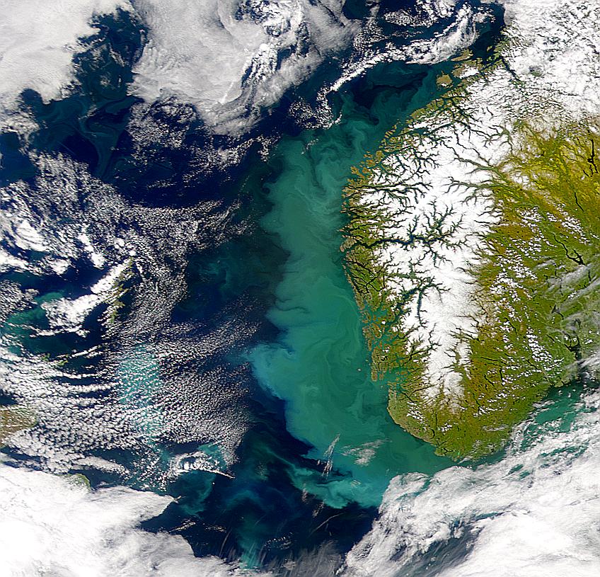 Proliferación marina cerca de Noruega sigue