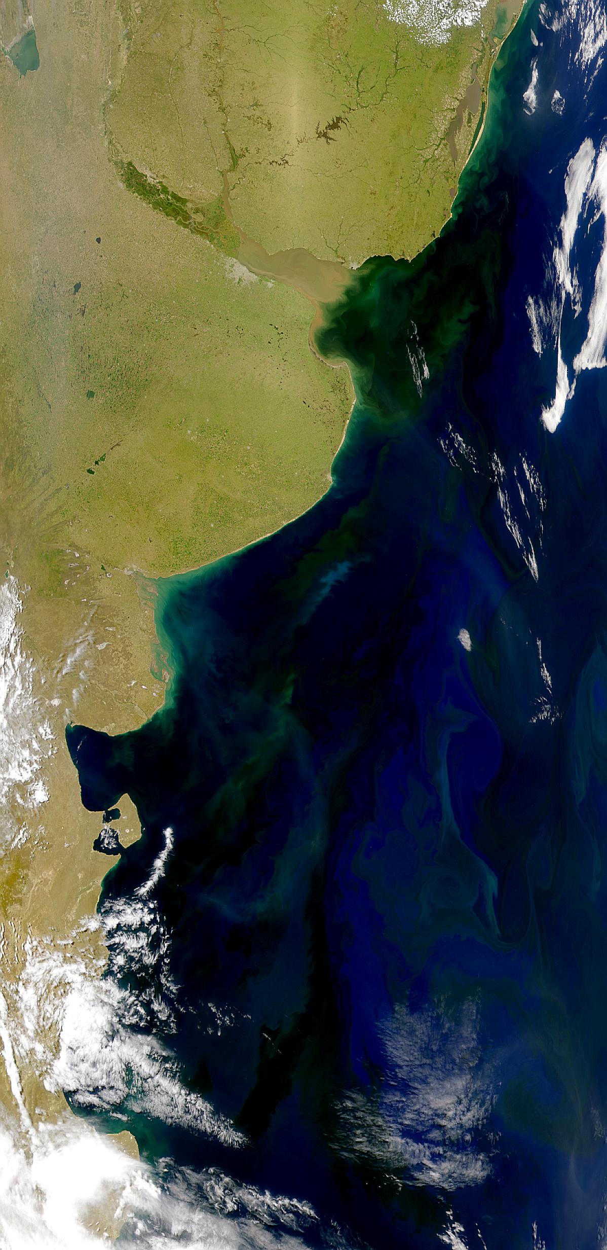 Proliferación marina en área costera de Argentina