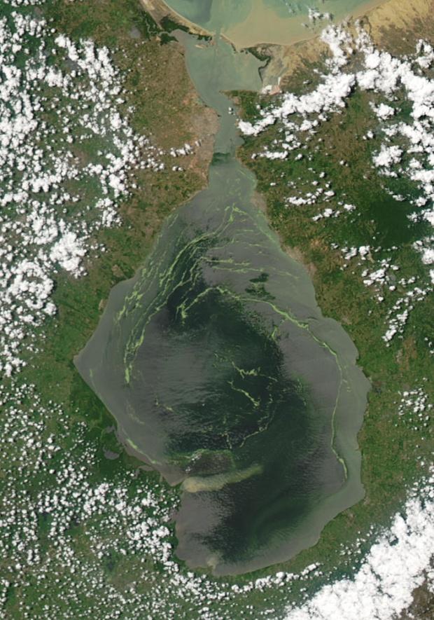 Lentejas de agua en el lago de Maracaibo, Venezuela