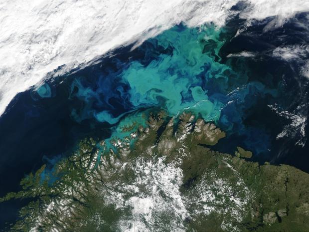 Proliferación de fitoplancton cerca de Noruega