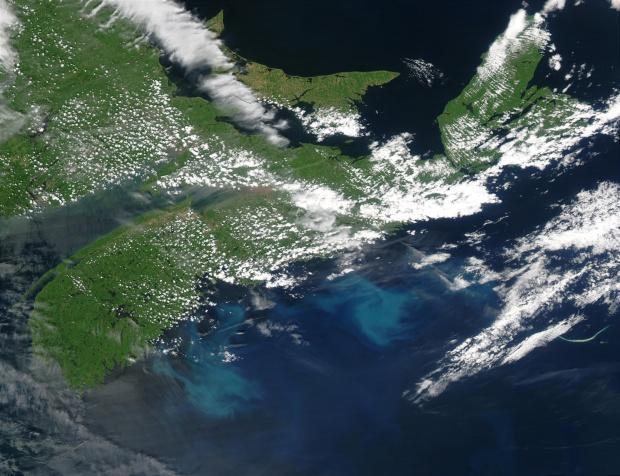 Proliferación de fitoplancton cerca de Nueva Escocia