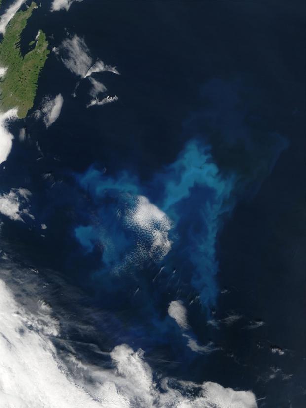 Proliferación de fitoplancton cerca de Terranova