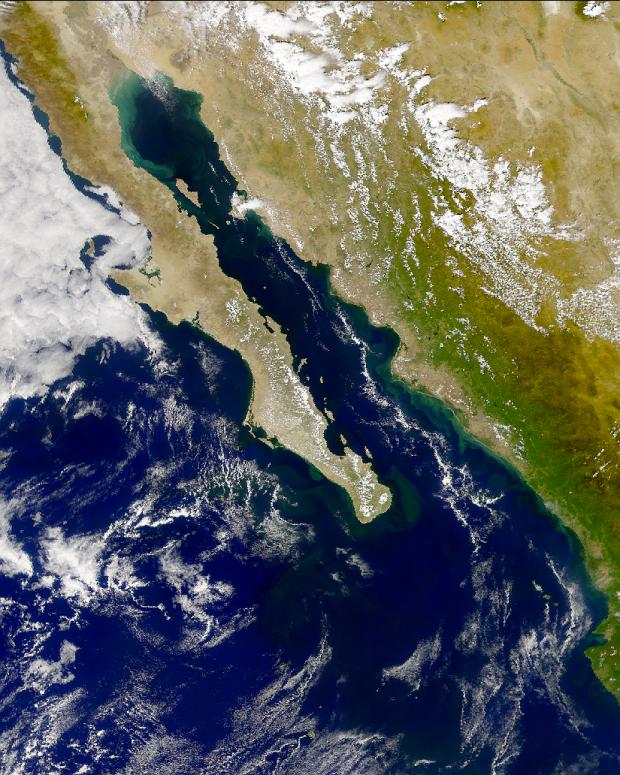 Proliferación de fitoplancton en el Golfo de California