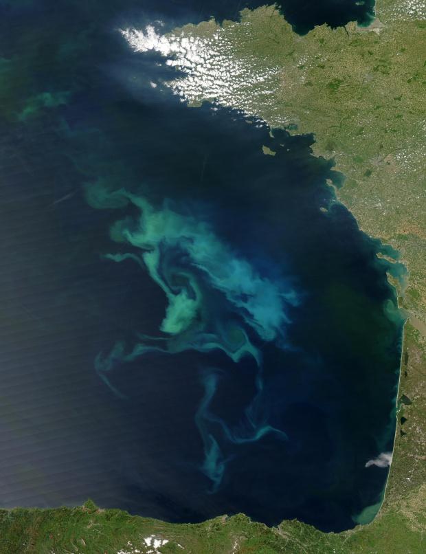 Proliferación de fitoplancton en el golfo de Vizcaya